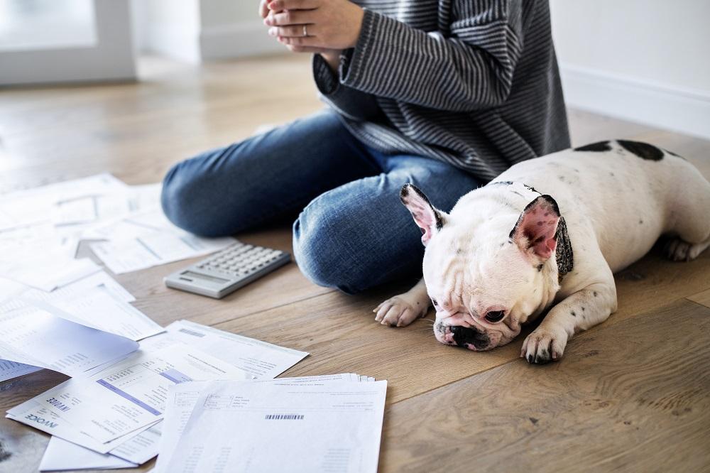 mulher e cachorro diante das dívidas